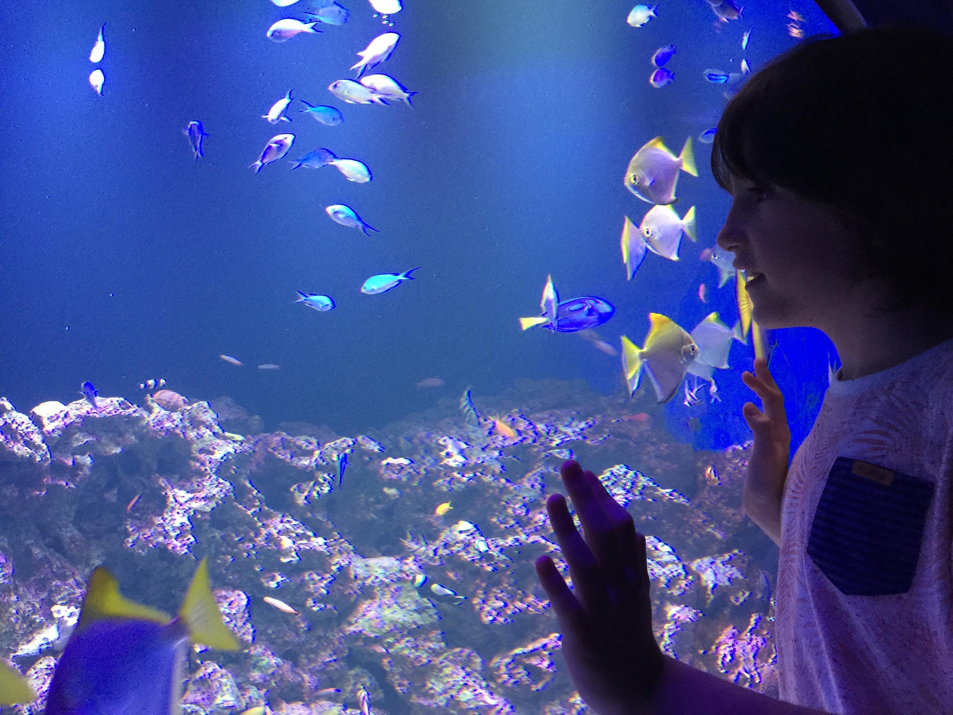 Escapes: Caccá Filippini fala sobre os benefícios do contato com os peixes