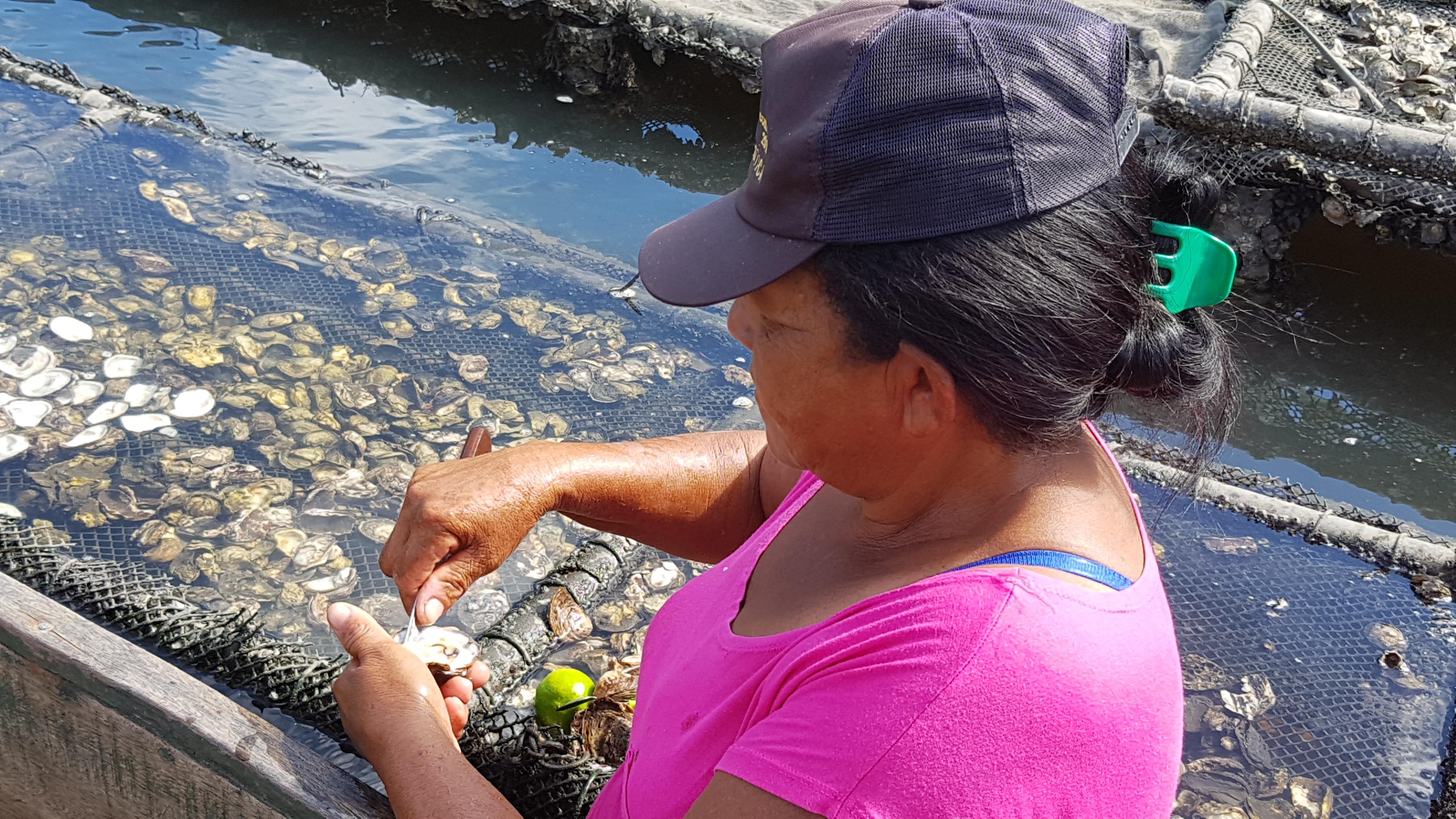 Por que todo mundo deveria conhecer as fazendas de ostras no Nordeste