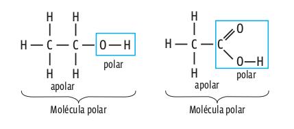 molecula_polar