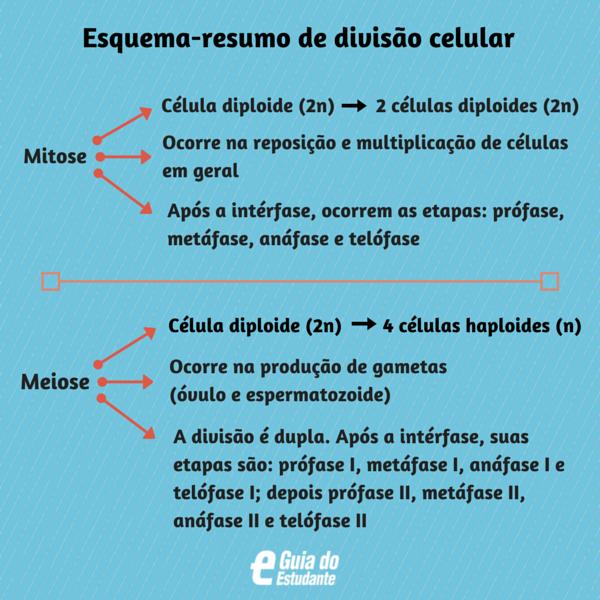 Esquema-resumo de divisão celular
