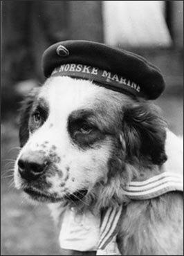 De acordo com as histórias, Bamse, o mascote da marinha norueguesa, teria salvado a vida de dois marinheiros durante a  2ª GM. (toto: tumblr/peerintothepast)