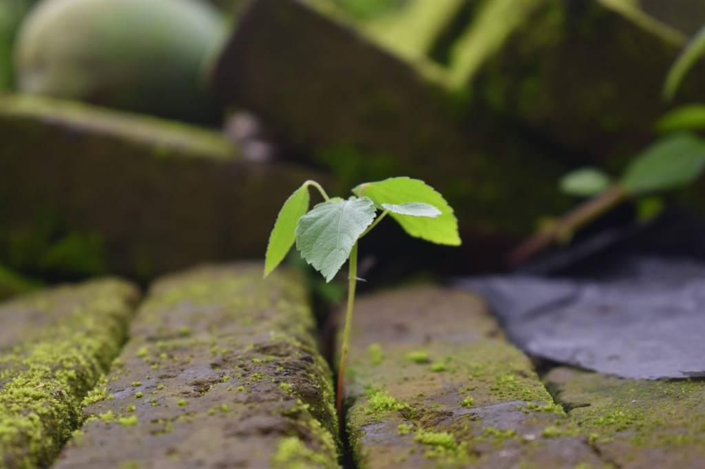 Dia Mundial do Meio Ambiente: entenda a importância da data